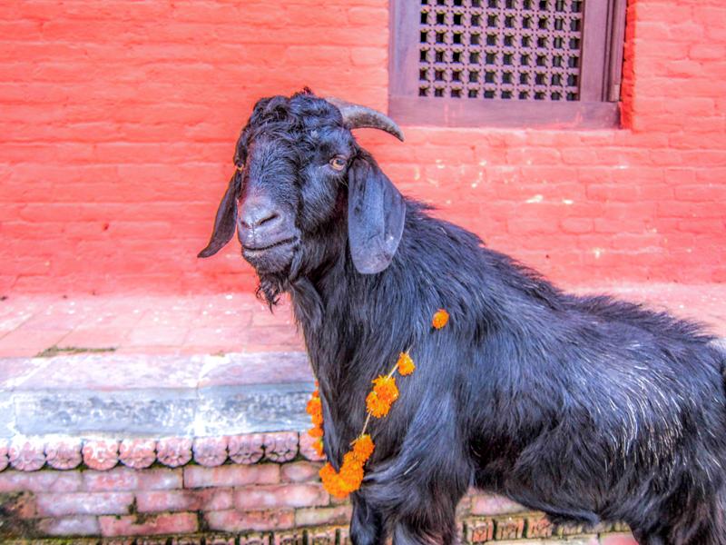 Pashupatinath - Kathmandu - Nepal