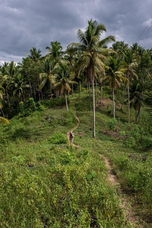 Cebu Island - The Philippines - Banana Journey (5)